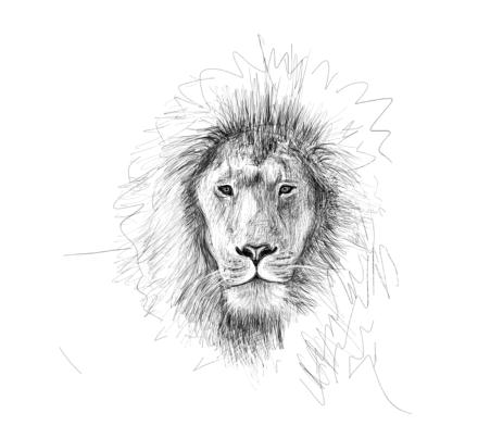 June 11, 2013 - A quick lion head sketch. It's amazing the things you learn when you draw something.