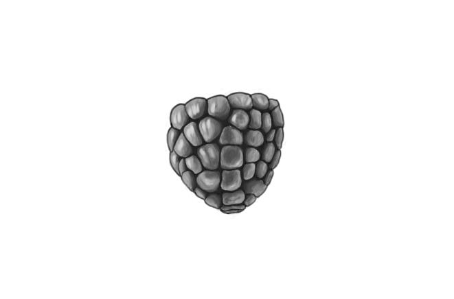 April 26, 2013 - Went for more of a black and white painting of a raspberry rather than drawing this time.