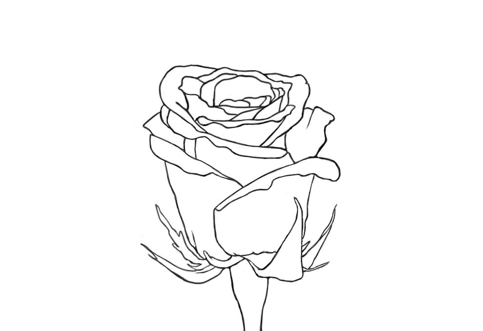 May 24, 2013 - A rose line drawing will have to do for today.