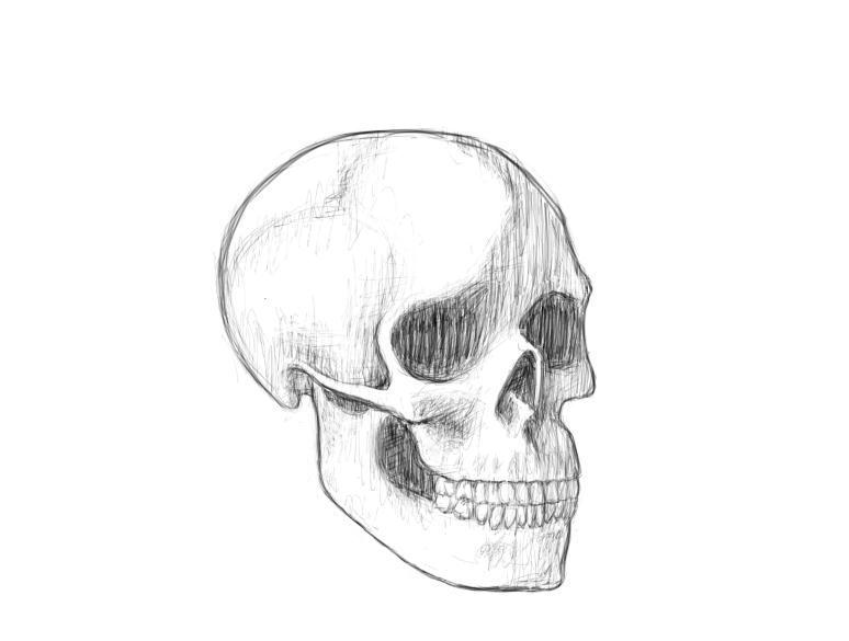 June 8, 2013 - A skull sketch, hopefully the first of many if one wants to improve their ability to draw faces.