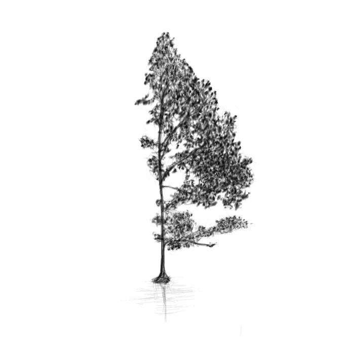 June 1, 2013 - A tree sketch inspired by a tree on a book cover of mine.