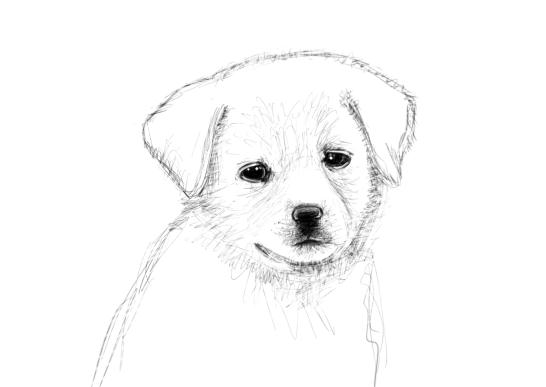 June 15, 2013 - Today marks 75 consecutive days of daily drawing. Hoorah! Let's celebrate with this puppy sketch, yes?