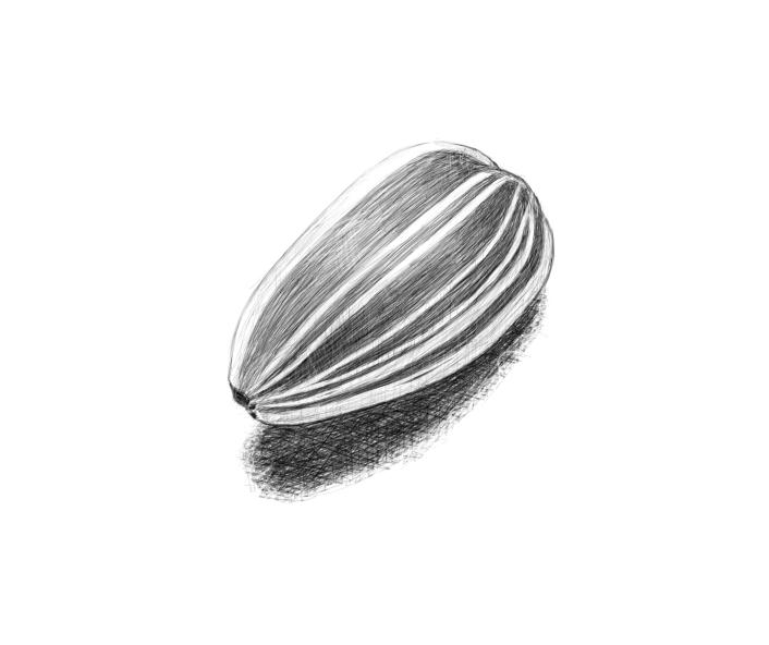 April 20, 2013 - Upon my brother's suggestion today I've drawn a sunflower seed.