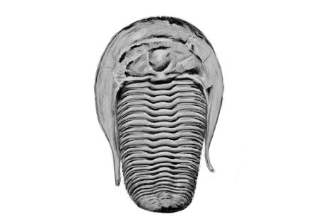 May 17, 2013 - I didn't even know what a trilobite was until yesterday. Fascinating creatures!